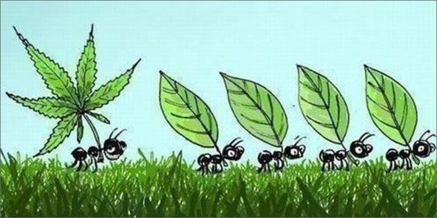 Blog, ants